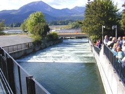 Pool-and-weir fish ladder at  on the