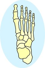 The bones in the foot provided by Classroom Clip Art (http://classroomclipart.com)