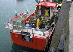 A  boat unloading its catch in  harbour, ,